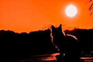 cat sitting at sunset-