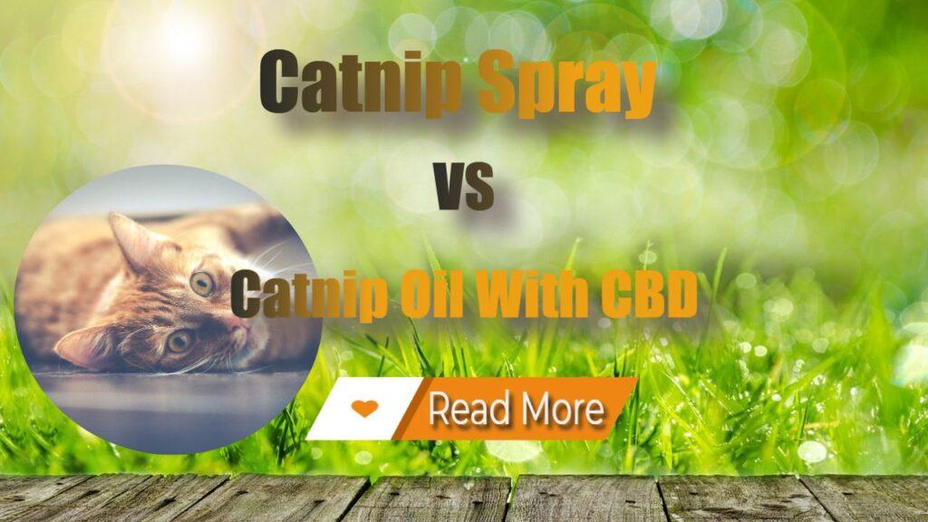 Catnip Spray vs CBD Oil With CBD